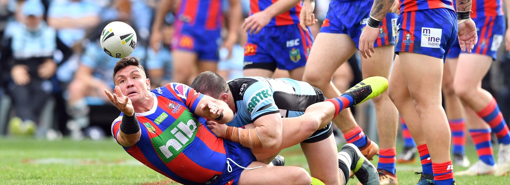 Sharks prove too strong for Knights